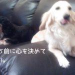 犬を飼う決意